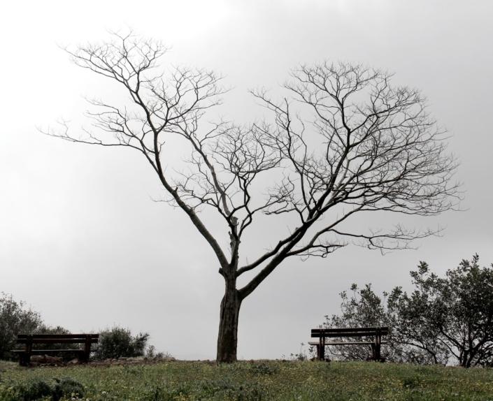עץ בקיבוץ תובל בזמן ריטריט זן